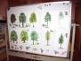 Jak žije les