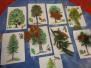 Les, stromy, plody